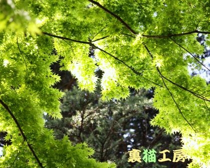 4月25日緑の館3のコピー