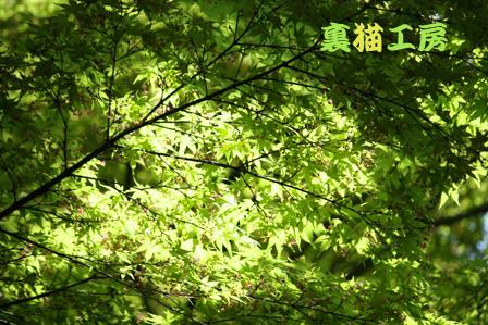 4月25日緑の館5のコピー