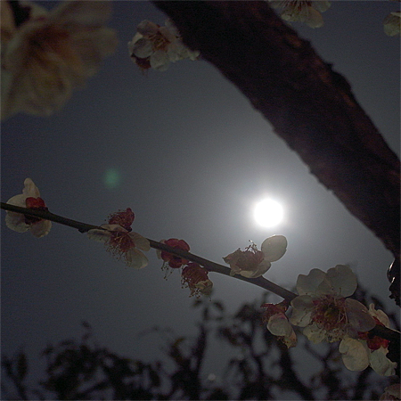 supermoon_ume.jpg