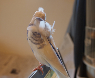キレイな羽根~♪