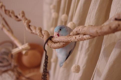 呑みに行った日は、放鳥おあずけです・・・