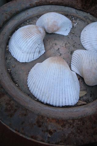 ハロン湾の貝