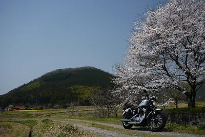 s-11:42桜