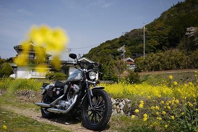 s-13:51菜の花