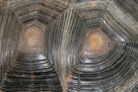 甲羅の模様