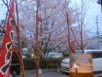 P3240090夜桜