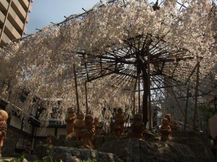 六角堂桜0322