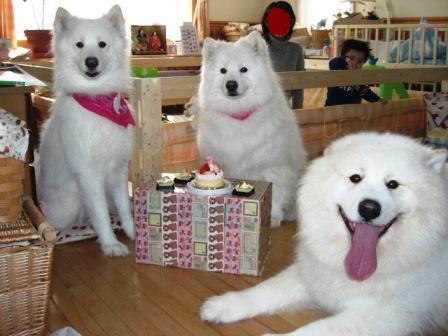 集合ケーキ前