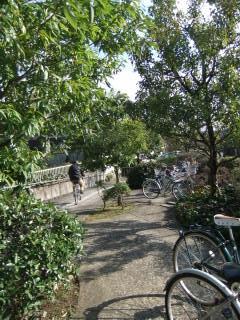 京都市岩倉図書館_06_2010-03-08