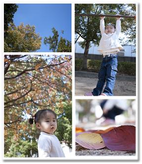 秋色葉っぱ
