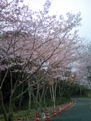 00-sakura.jpg