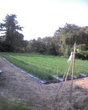 2010 10 19 ニラ畑