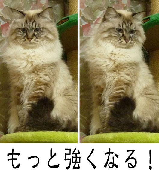 01011_20120107184144.jpg