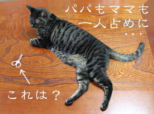 01080_20120102190645.jpg