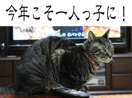 01081_20120102190627.jpg