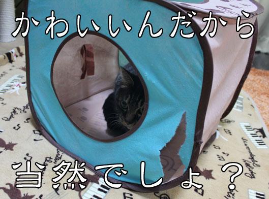 01083_20120102190837.jpg