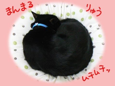 marumarumaru.jpg