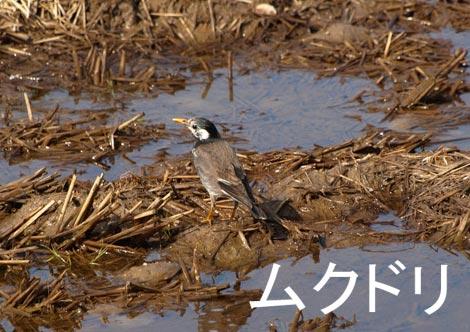 muku_20100322150043.jpg
