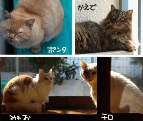 yonhiki_20100306134527.jpg
