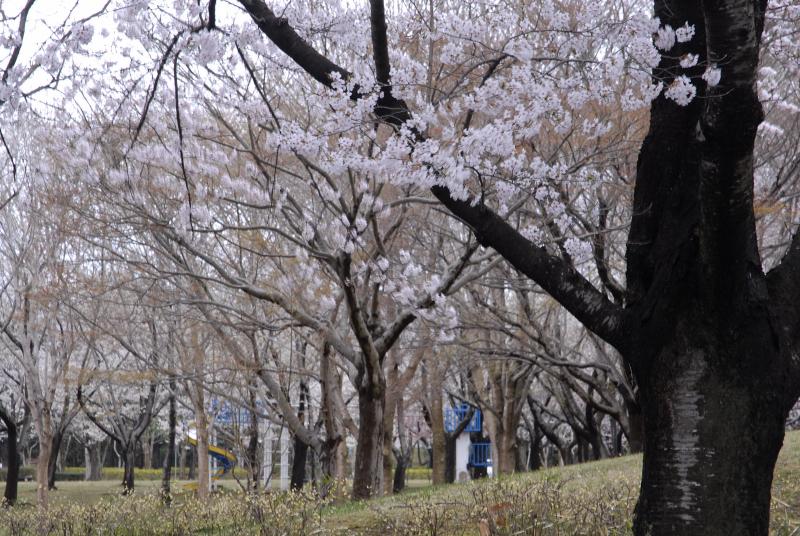 photo:松崎シンイチ