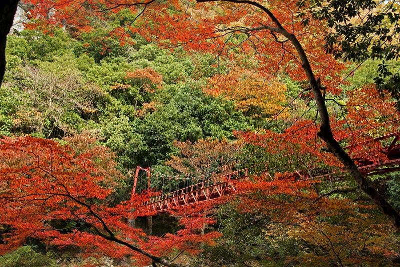 長門峡(もみじ橋)