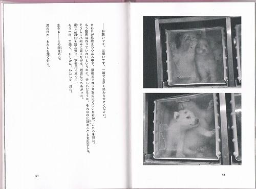 CCF20130307_00001 (2)
