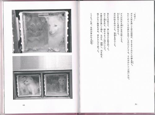 CCF20130307_00000 (2)