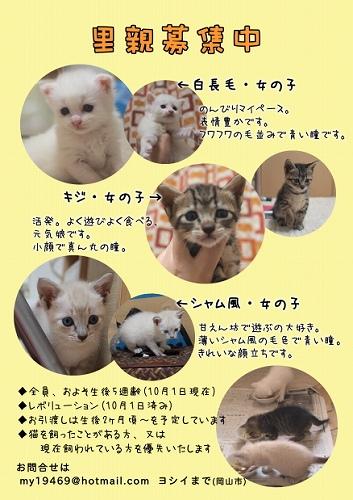 web2_20101007061943.jpg