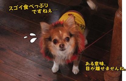 驚く、チワワちゃん(^_^;)