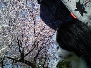 お花見23