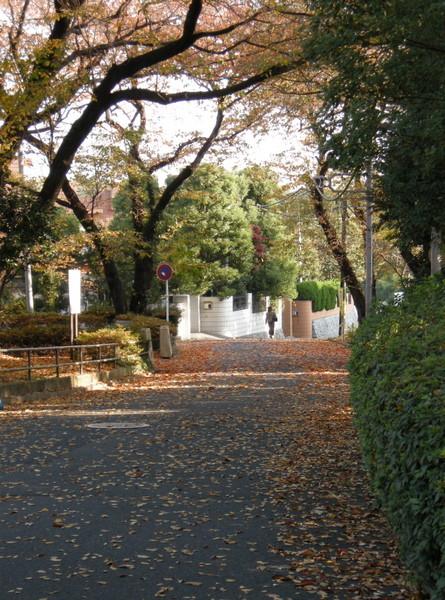 落ち葉の通勤路