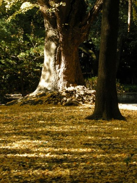 日比谷公園4
