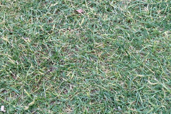 芝の状態クローズアップ1