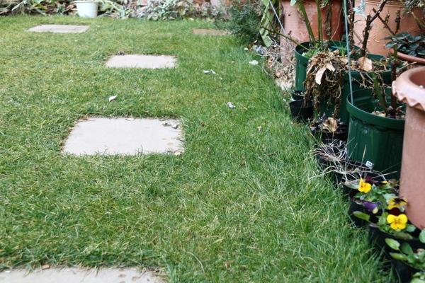 芝の状態クローズアップ2