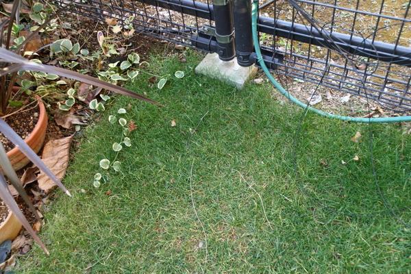 芝の状態クローズアップ3