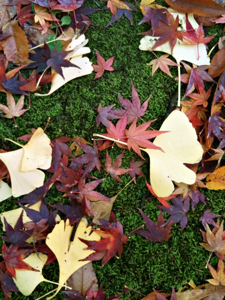 日比谷公園の落ち葉2