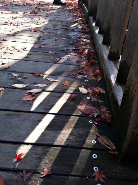 日比谷公園の落ち葉3