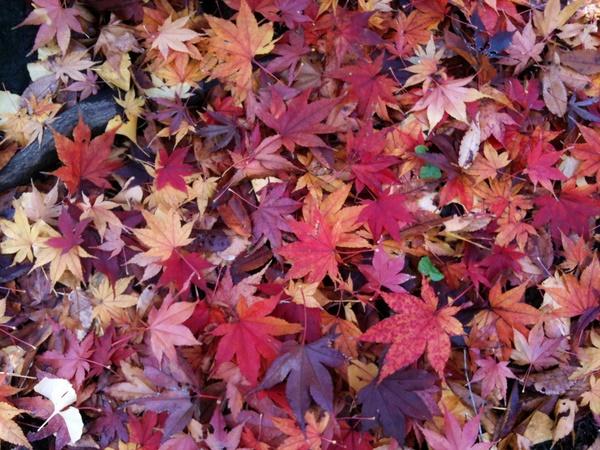 日比谷公園の落ち葉1