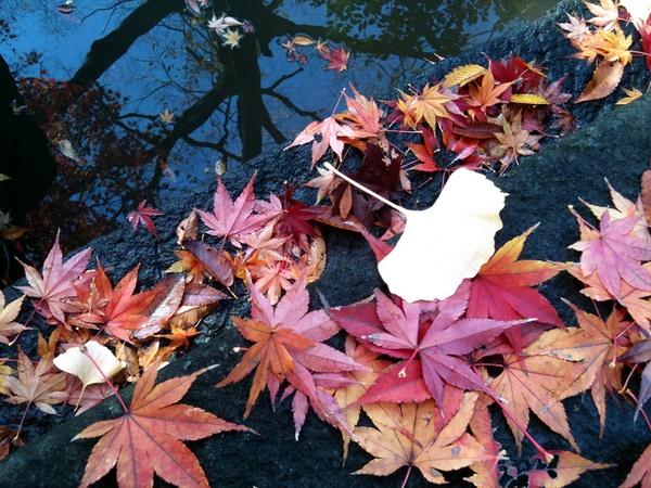 日比谷公園の落ち葉4