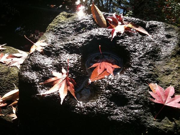 日比谷公園の落ち葉5
