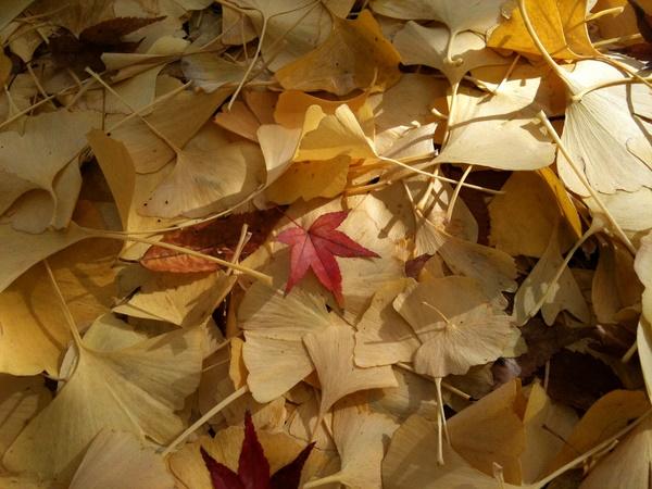 日比谷公園の落ち葉6