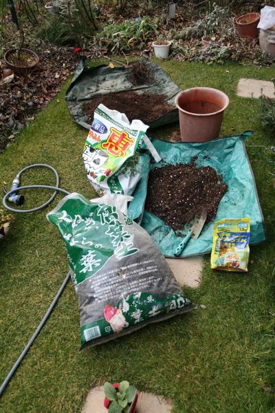 バラ鉢の土替え