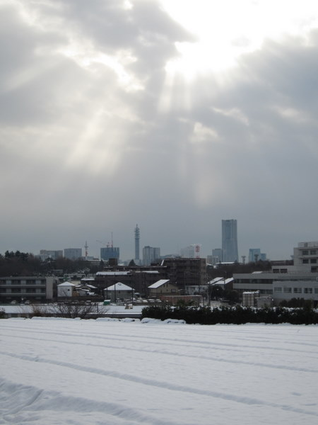 「嬬恋高原」のキャベツ畑