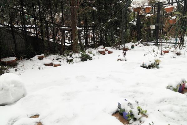 今朝の積雪2