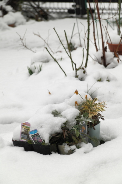 今朝の積雪1