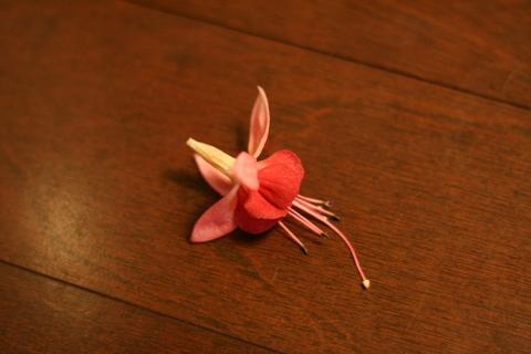 床に落ちたフクシアの花
