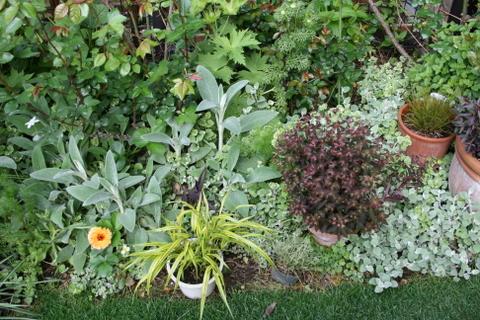 バラ花壇の宿根草