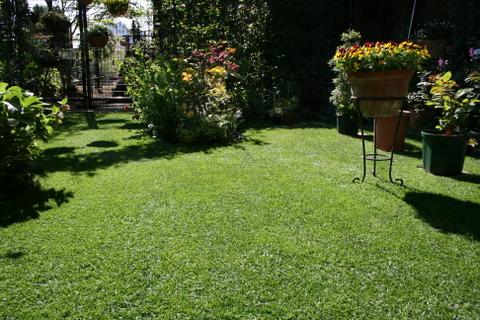 芝刈り後の庭1