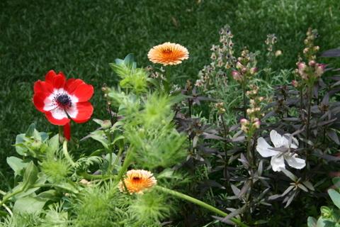 新設花壇の花