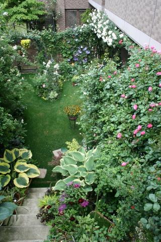 今朝の庭1